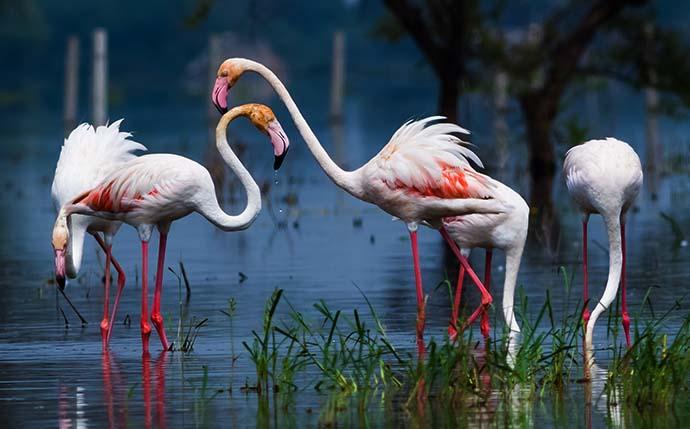 Rajasthan wild life tour | Rajasthan Wildlife Tour Packages ...